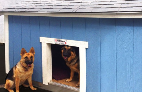 MarchShedofMonth-Dogs